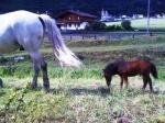richtig kleines Pferdchen