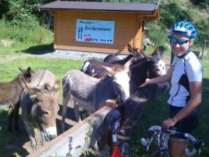 6 Esel